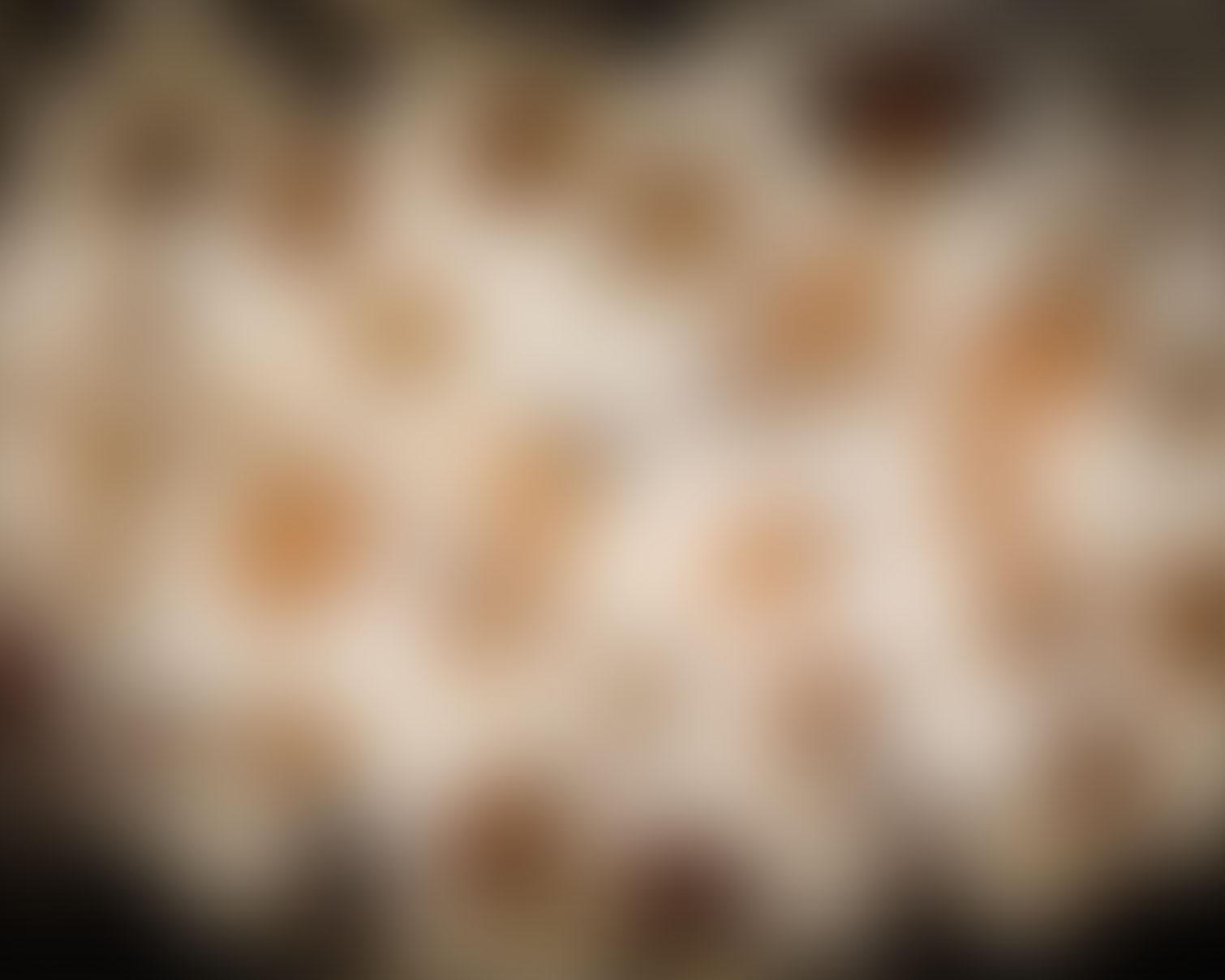 fond-leopard-flou